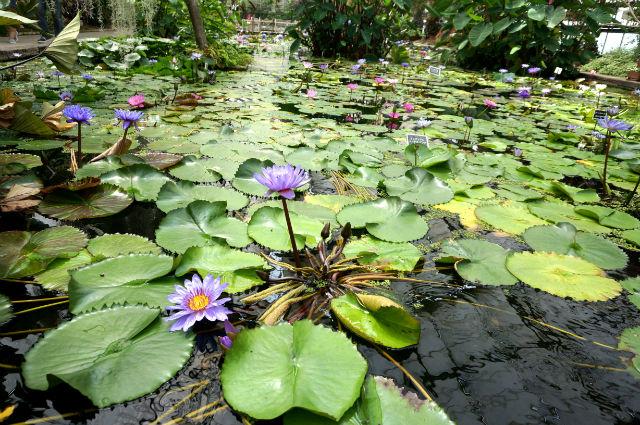 神戸どうぶつ王国でキレイな植物