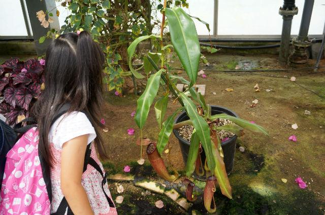 神戸どうぶつ王国で不思議な植物