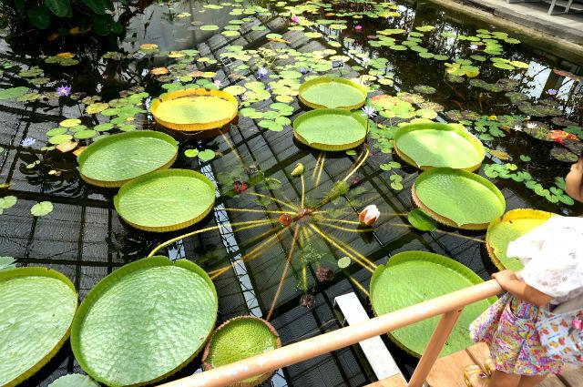神戸どうぶつ王国の浮く植物