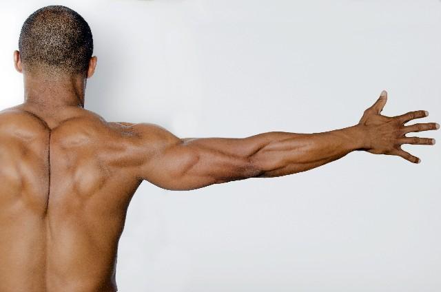 筋肉は記憶する