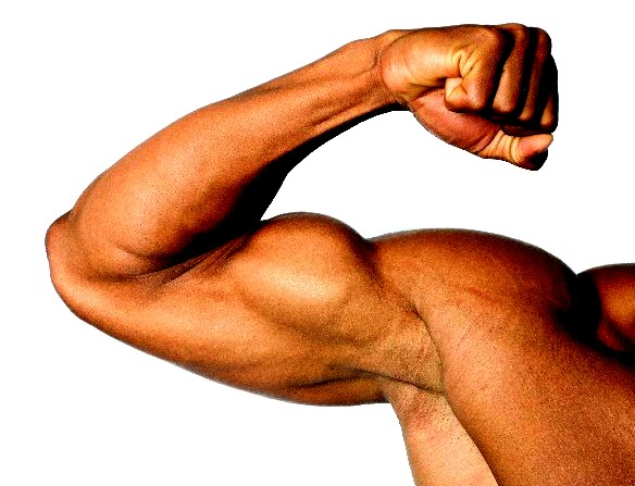 剛腕の筋肉