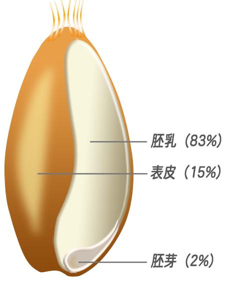 小麦の構成
