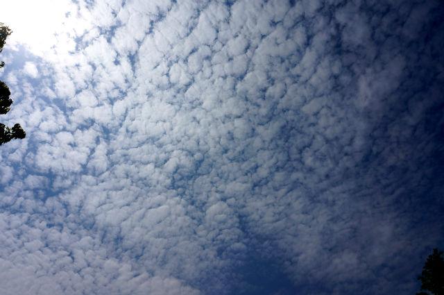 ランニングコースから見上げた空