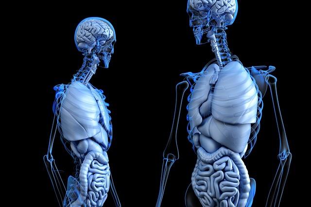 腎臓とクレアチニン